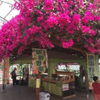 STRAWBERRY CAFE 磯山観光いちご園(笹川い)_スイーツ_10875887