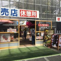 STRAWBERRY CAFE 磯山観光いちご園(笹川い)_スイーツ_10875893
