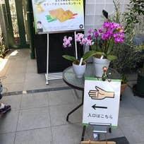 オーガニックベーカリーミミ(奥沢)_洋菓子_10928308