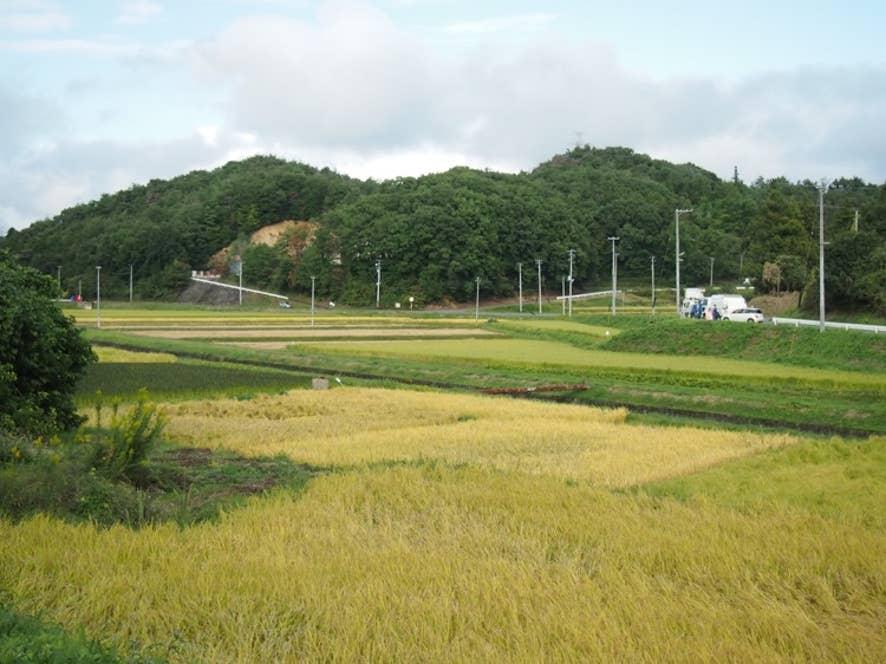 ▲景色一面に広がる自然栽培米の田んぼ