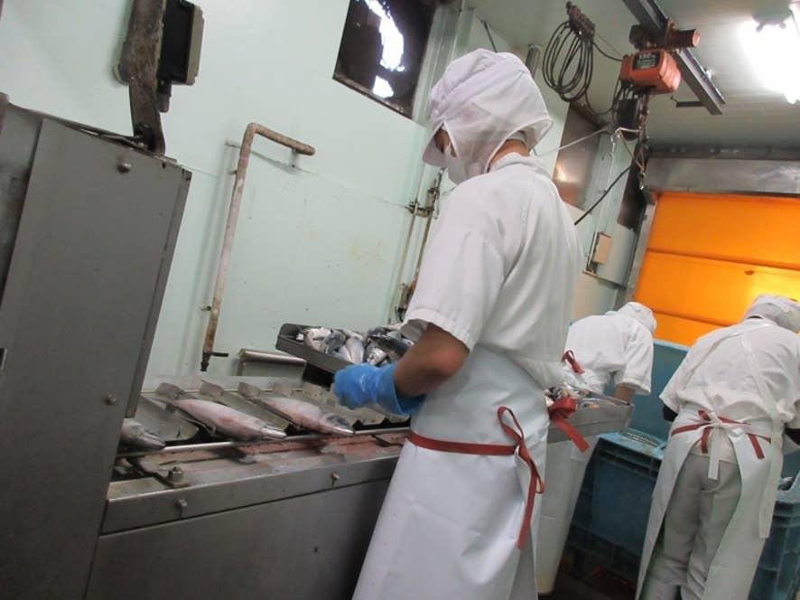 ひとつひとつ丁寧に手作業で缶詰製造がおこなわれている。