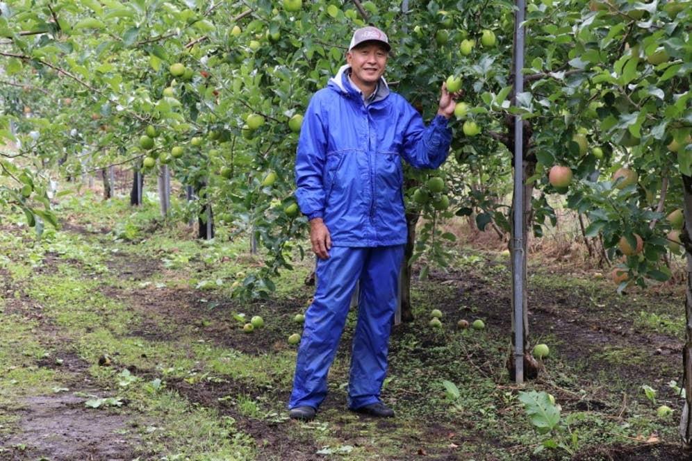 りんご農園にたわわに実った「はつ恋ぐりん」。今さんは代々続くりんご農家の息子でもある。