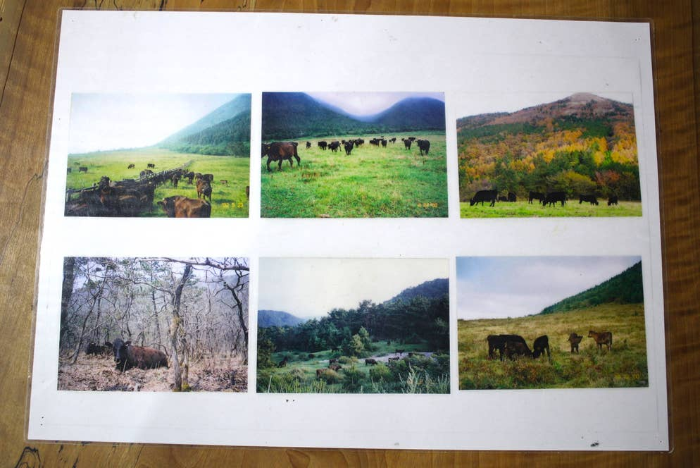 ▲大自然のなかで育つ三瓶の放牧牛