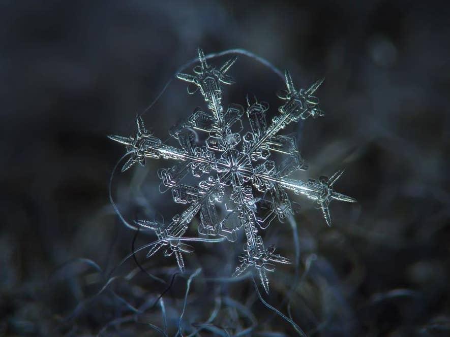 ▲雪の結晶。上川町は降雪量が非常に多く、特別豪雪地帯に指定されている